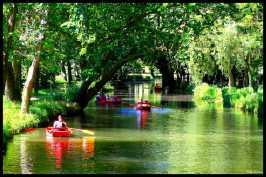 barques-au-sous-bois