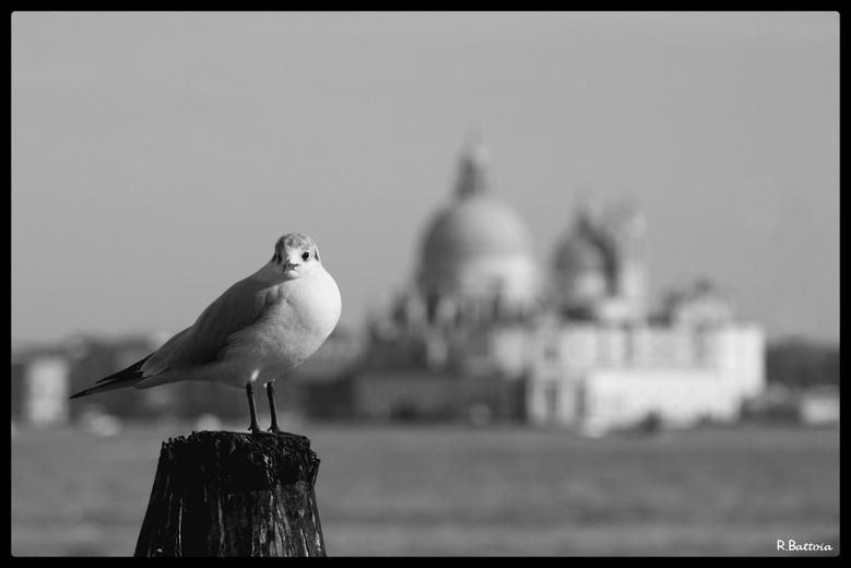 Oiseau vénitien et Salute